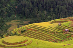 Campo de almofada na época da colheita Fotos de Stock
