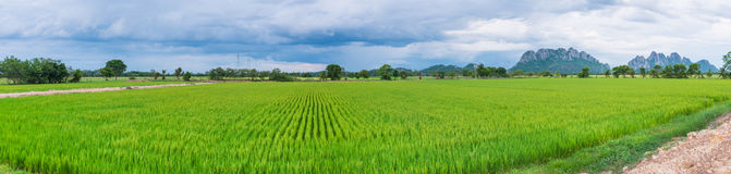 Campo de almofada no panorama de Tailândia Fotos de Stock Royalty Free