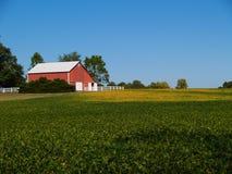 Campo de amadurecimento do feijão de soja na frente de um celeiro vermelho Fotografia de Stock Royalty Free