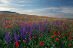 Campo de amapolas florecientes en la Crimea Paisaje en la puesta del sol del dayÑŽ Imagen de archivo
