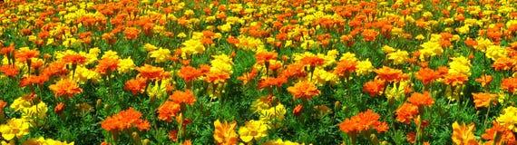 Campo de amarillo y de la naranja Imágenes de archivo libres de regalías