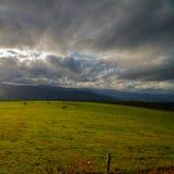 Campo de Ancares com vacas Fotos de Stock