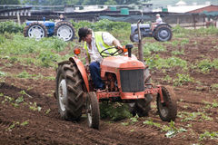 Campo de arado restaurado del tractor de granja del vintage para plantar Fotos de archivo libres de regalías