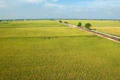 Campo de arroz Imagen de archivo