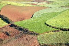 Campo de arroz Imagen de archivo libre de regalías