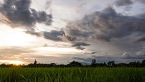 Campo de arroz con el cielo hermoso metrajes
