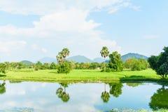 Campo de arroz con la nube en Loei Fotografía de archivo