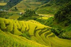 Campo de arroz de arroz Foto de archivo libre de regalías