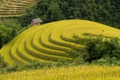 Campo de arroz de arroz Fotografía de archivo