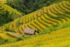 Campo de arroz de arroz Imagen de archivo libre de regalías
