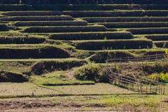 Campo de arroz después de la cosecha fotos de archivo