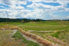 Campo de arroz en Medan Indonesia fotografía de archivo libre de regalías