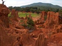 Campo de arroz en provincia del Sa Keaw en Tailandia Foto de archivo