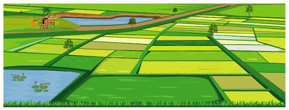 Campo de arroz grande stock de ilustración