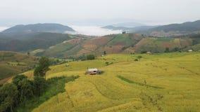 Campo de arroz de oro de arroz del paso de la visión aérea en Chiangmai, Tailandia almacen de metraje de vídeo