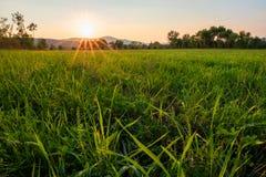 Campo de arroz que cultiva en la salida del sol imagenes de archivo