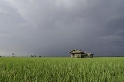 Campo de arroz verde y casa de madera del abandono con el fondo dramático de la nube Imagenes de archivo