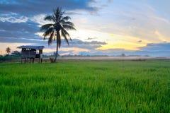 Campo de arroz y poca choza Imágenes de archivo libres de regalías