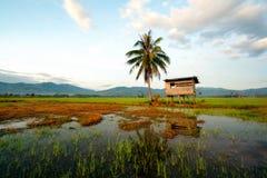 Campo de arroz y poca choza Imagen de archivo libre de regalías
