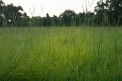 Campo de bahiagrass - paisaje rural de la granja Imágenes de archivo libres de regalías