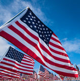 Campo de bandeiras americanas Fotos de Stock Royalty Free