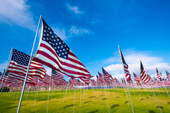 Campo de bandeiras americanas Imagens de Stock