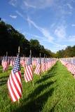 Campo de bandeiras americanas durante o Dia da Independência dos E.U. Fotografia de Stock