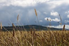 Campo de batalha de Culloden perto de Inverness, Escócia foto de stock royalty free