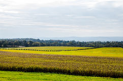 Campo de batalha histórico da guerra civil de Gettysburg Imagens de Stock