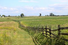 Campo de batalla de Gettysburg que mira hacia el soto de árboles imagen de archivo libre de regalías
