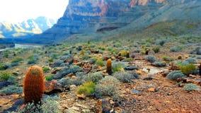 Campo de cactus foto de archivo libre de regalías