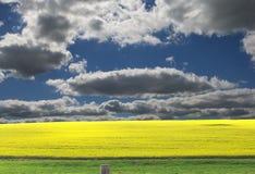Campo de Canola em Australi sul Imagens de Stock
