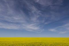 Campo de Canola y cielo azul Imágenes de archivo libres de regalías