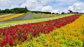 Campo de Chrysanth Imagem de Stock Royalty Free