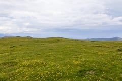 Campo de Chrysanth Fotografía de archivo
