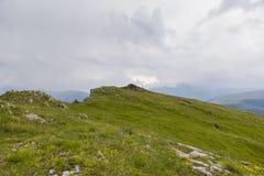 Campo de Chrysanth Fotos de archivo libres de regalías