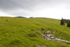 Campo de Chrysanth Foto de archivo libre de regalías
