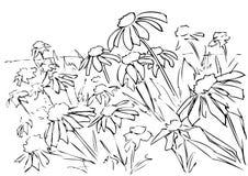 Campo de Chrysanth stock de ilustración