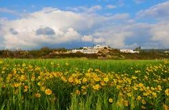 Campo de Chrysanth fotografía de archivo libre de regalías