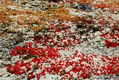 Campo de cores da queda imagens de stock