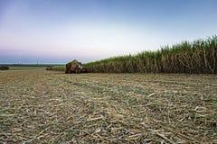 Campo de cosecha mecánico de la caña de azúcar en la puesta del sol en el sao Paulo Brazil - tractor que espera su vuelta en la c imagen de archivo