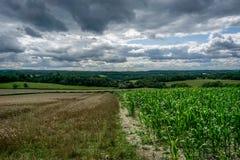 Campo de cosechas Imagen de archivo