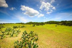 Campo de cultivo verde em montes Fotografia de Stock Royalty Free