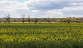 Campo de Essex en primavera Foto de archivo