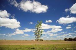 Campo de exploração agrícola Foto de Stock