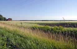 Campo de exploração agrícola Fotografia de Stock Royalty Free