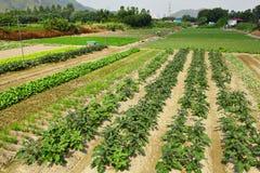 Campo de exploração agrícola Imagem de Stock