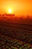 Campo de exploração agrícola fotografia de stock