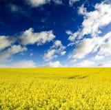 Campo de exploração agrícola. Fotografia de Stock Royalty Free