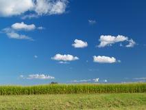 Campo de exploração agrícola Imagens de Stock Royalty Free